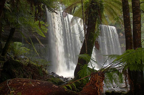 Russel Falls from under the fern canopy.