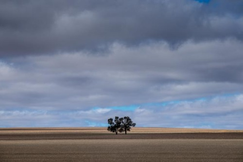 The Wimmera, wheat growing country of western Victoria © Rob Walls 2015